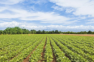 Продажа участка для фермерского хозяйства в Ленинградской области